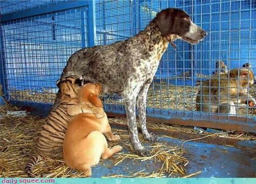 baby cub dogs mama monkey tiger - 4181208576