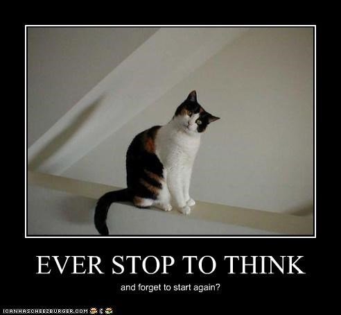 again caption captioned cat forget Hall of Fame question start stop think - 4181219584