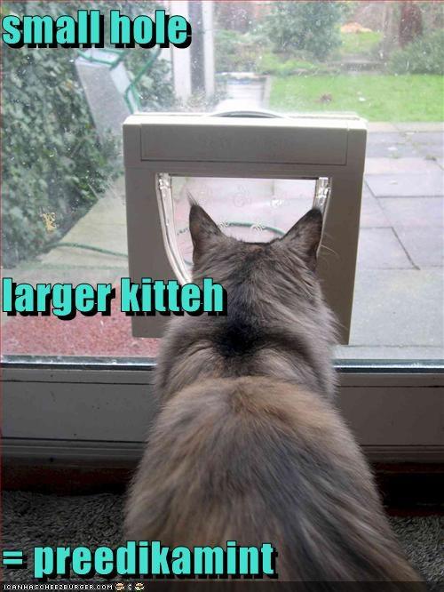 Cheezburger Image 418135296