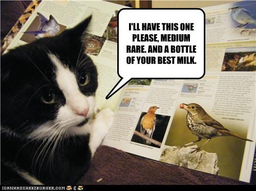 best birds bottle caption captioned cat dining excited i can has ill-have medium rare menu milk order ordering please restaurant this one - 4181555712