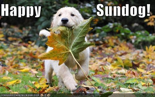 golden retriever happy happy sundog leaf prancing puppy Sundog - 4182238464
