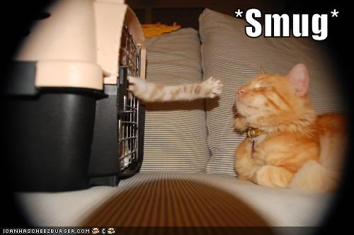 cage caption captioned cat Cats FAIL mean reaching schadenfreude smug - 4182304256
