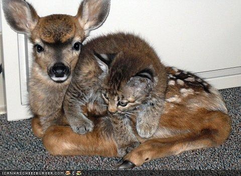 bambi,cyoot kitteh of teh day,deer,Interspecies Love