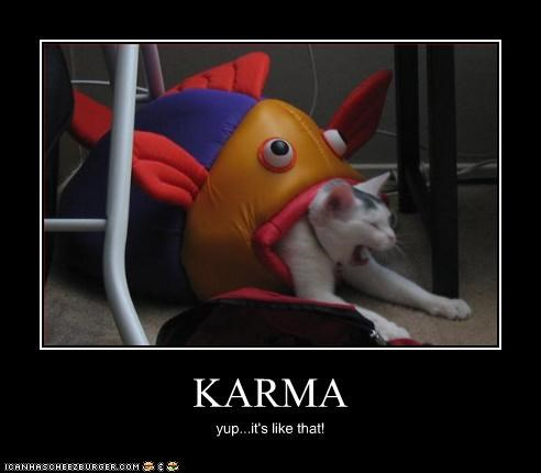 caption captioned cat demonstration do not want eaten fish freaked out karma like that payback stuffed animal upset
