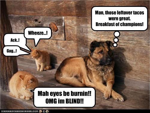 Man, those leftover tacos were great. Breakfast of champions! Ack..! Mah eyes be burnin!! OMG im BLIND!! Gag...! Wheeze...!