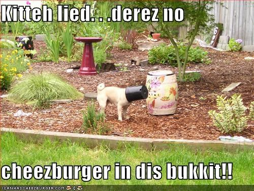 Cheezburger Image 4183969536