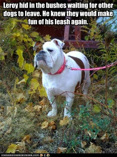 bulldog,bushes,dogs,embarrassed,hiding,leash,making fun,mocking,other,pink