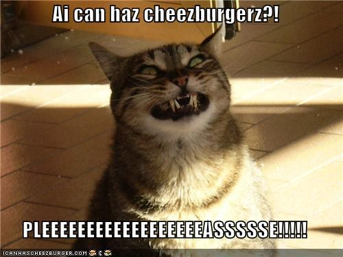 Cheezburger Image 4184318208