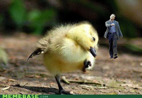 ducklng leo strut leonardo dicaprio Memes photochop Technologically Impaired Duck - 4184990208