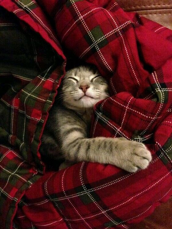 a cute list of animals all in blankets