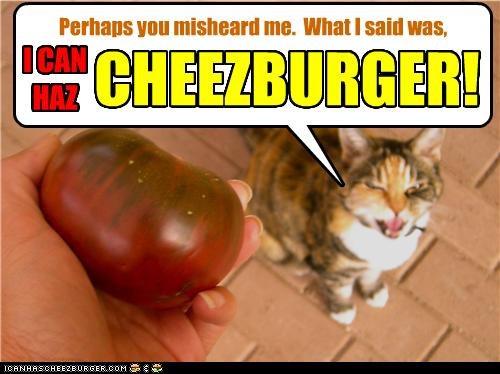 Cheezburger Image 4185311744