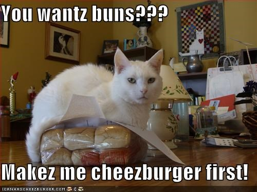 Cheezburger Image 4185421312