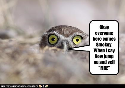 caption,captioned,false alarm,fire,joke,mean,Owl,prank,pranking,Smokey the Bear