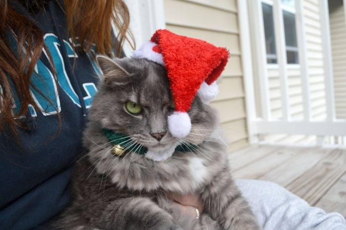 christmas pets holidays Spirit - 4185861