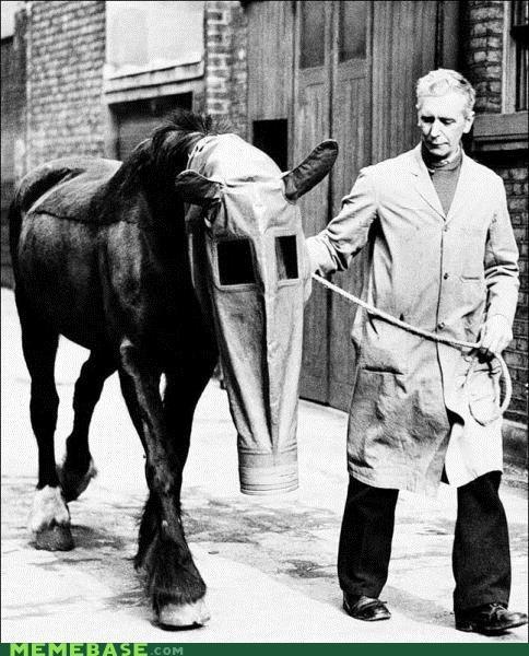 animals gas mask horse vintage wtf - 4186064128