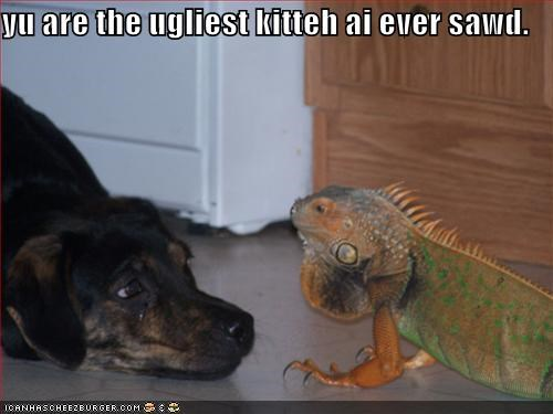 cat confusion ever iguana just saying kitty ugliest whatbreed