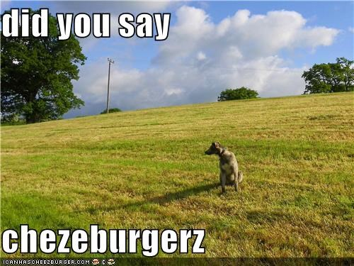 Cheezburger Image 4186836480