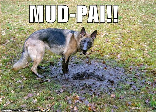 covered,face,german shepherd,mess,messy,mud,mud pie,muddy