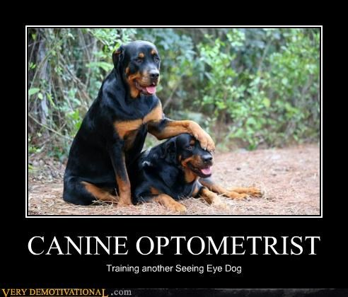 CANINE OPTOMETRIST Training another Seeing Eye Dog