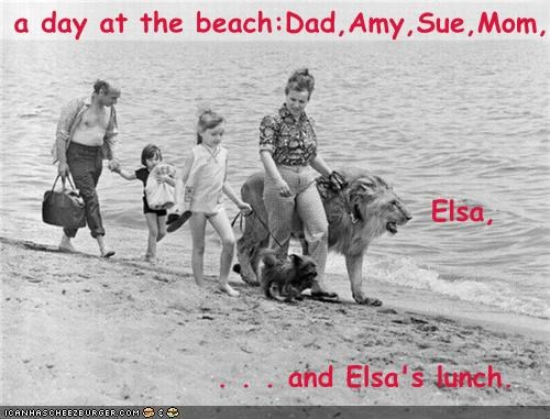 beach,dogs,family,lion,pets