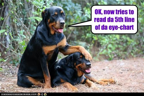 5th covering dogs eye eye chart line reading rottweiler sight test try two