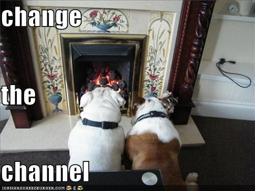 bored bulldog bulldogs change channel fire fireplace request Staring TV