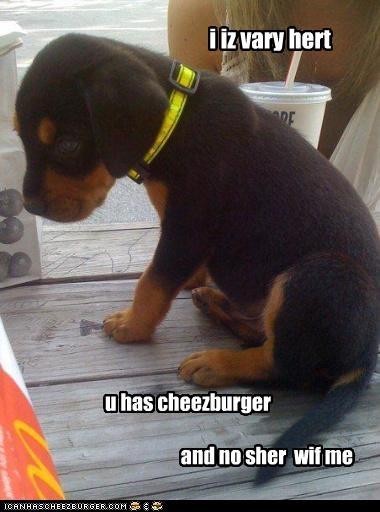Cheezburger Image 4188005376