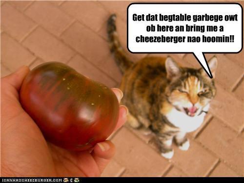Cheezburger Image 4188201984