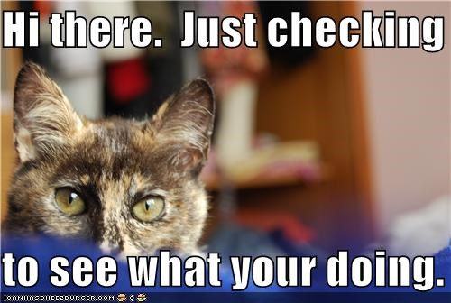 Hi There Just Checking To See What Your Doing Cheezburger Funny Memes Funny Pictures
