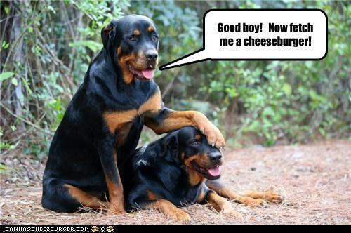 Cheezburger Image 4188442624