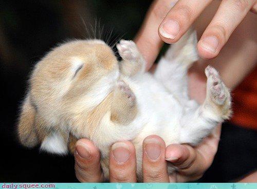 bunny cute sleepy squee - 4189069568
