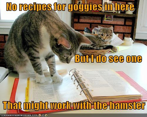alternative caption captioned cat Cats cookbook disappointed goggie hamster none perusing recipe recipes