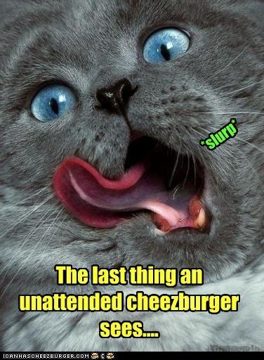 Cheezburger Image 4190104832