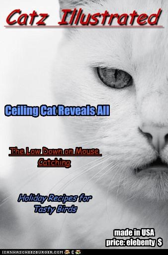 articles caption captioned cat Cats cover illustrated magazine posing topics - 4190261248