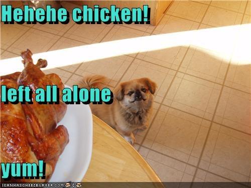 Cheezburger Image 4190535424