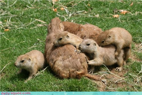 cluster equation exponential increase math mathematics measuring more is better pile prairie dog Prairie Dogs theory - 4190740224