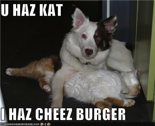 Cheezburger Image 4190898688