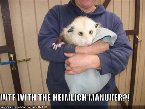 blanket critters derp heimlich maneuver opossom possom some sort of rodent at least - 4190986240