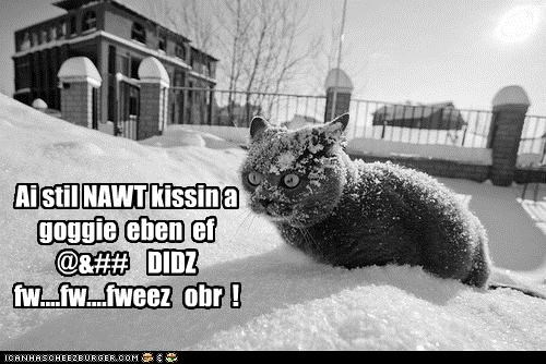 caption,captioned,cat,expression,figure of speech,frozen,goggie,kissing,refusal,snow