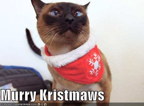 cat christmas critters holiday - 4191014912