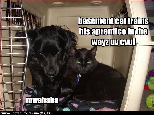 basement cat trains his aprentice in the wayz uv evul mwahaha
