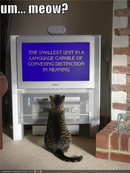 answer caption captioned cat communication Jeopardy meow question Staring TV - 4191473408