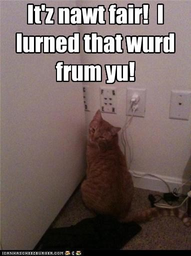 caption captioned cat human learned not fair source tabby upset word - 4191735552