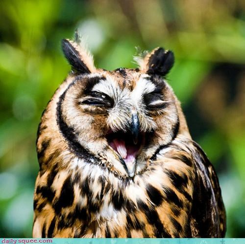 acting like animals aristocrats construction funny humor joke laughing Owl ripoff storytelling