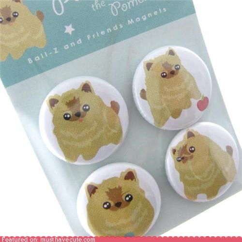 magnets,pomeranians,puppies