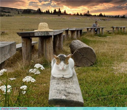 bodhisattva cat meditating meditation nirvana om purr purring zen - 4193612288