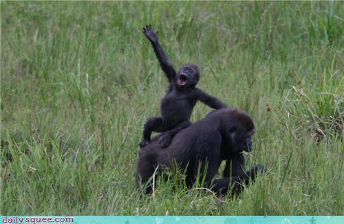 baby gorilla monkey - 4193617664