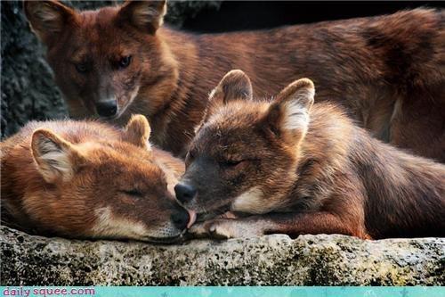 boop floof fox whatsit - 4193621760