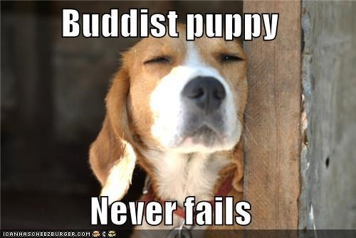 beagle,buddhist,content,contented,FAILS,never,puppy,smirk,smirking