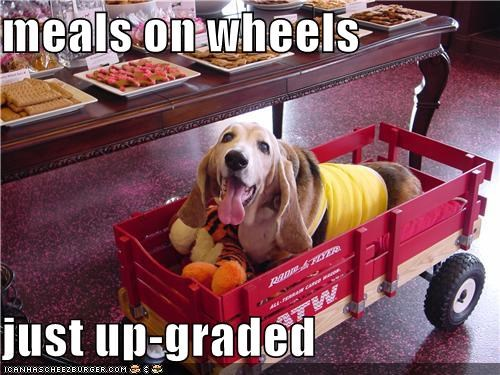 basset hound,meals on wheels,noms,riding,upgrade,upgraded,wagon
